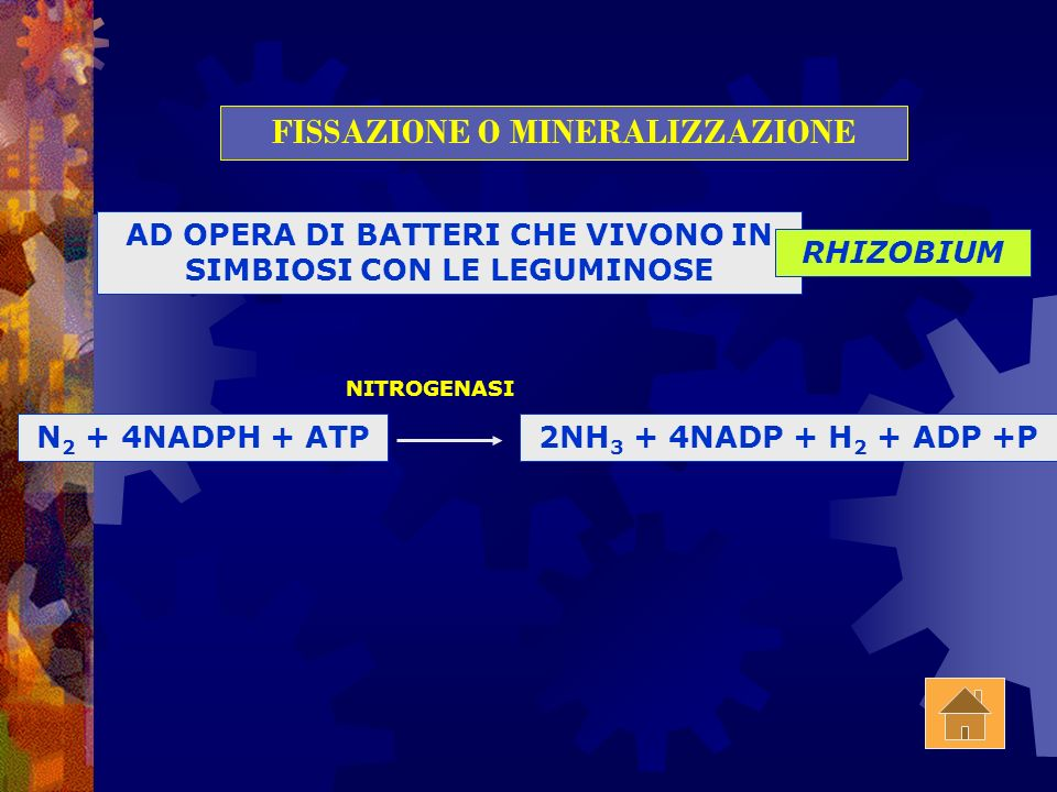 CICLO DELLAZOTO N 2 Atmosferico NH 3 FISSAZIONE (O MINERALIZZAZIONE) NO 2 - NO 3 - NITRIFICAZIONE DENITRIFICAZIONE ASSORBITO DALLE PIANTE RIFIUTI ORGA