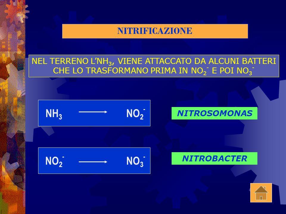 FISSAZIONE O MINERALIZZAZIONE N2 N2 + 4NADPH + ATP2NH 3 + 4NADP + H2 H2 + ADP +P AD OPERA DI BATTERI CHE VIVONO IN SIMBIOSI CON LE LEGUMINOSE NITROGEN