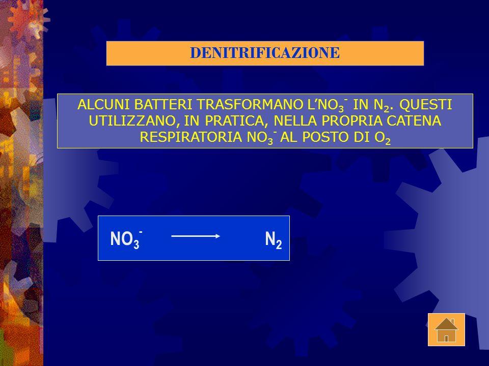 NITRIFICAZIONE NEL TERRENO LNH 3, VIENE ATTACCATO DA ALCUNI BATTERI CHE LO TRASFORMANO PRIMA IN NO 2 - E POI NO 3 - NH 3 NO 2 - NO 3 - NO 2 - NITROBAC