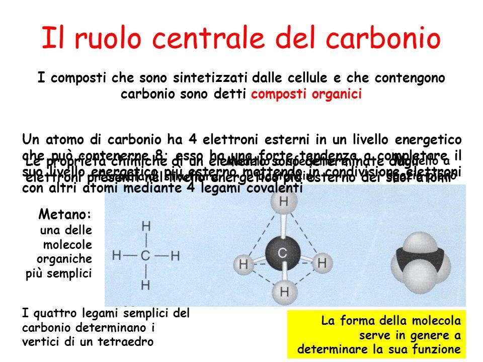 Il ruolo centrale del carbonio I composti che sono sintetizzati dalle cellule e che contengono carbonio sono detti composti organici Metano: una delle
