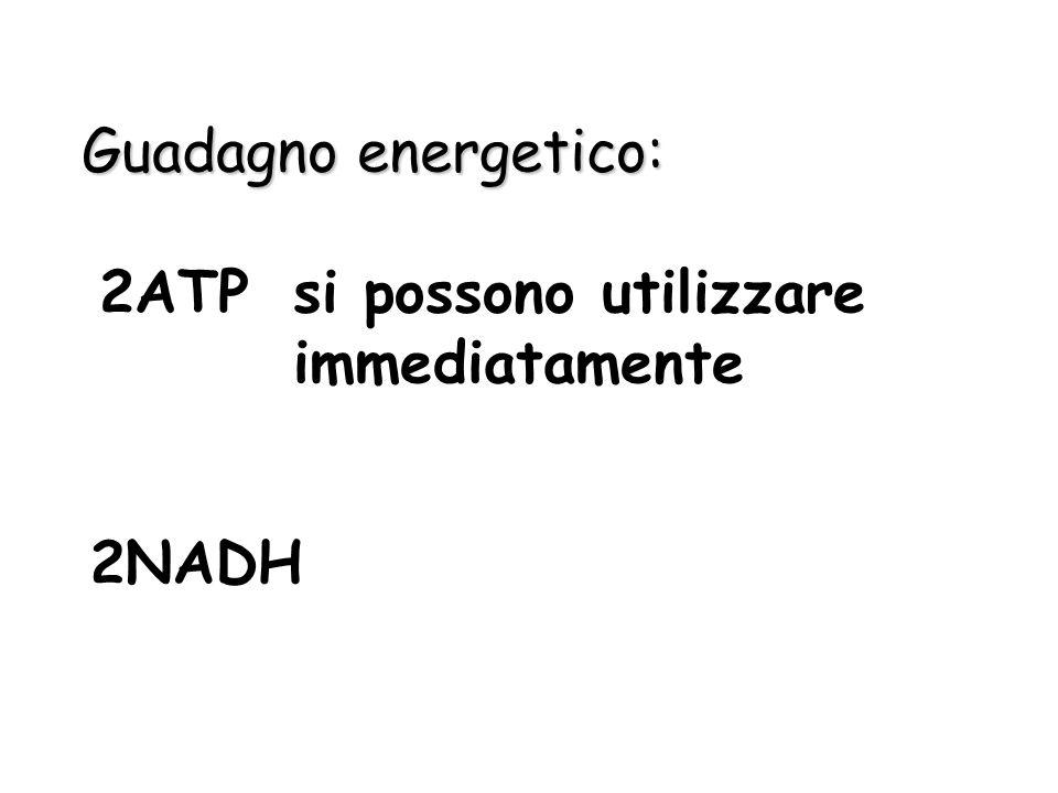 In sintesi glucosio + 2ATP + 4ADP + 2Pi + 2NAD + 2acido piruvico + 2ADP + 4ATP + 2NADH + 2H + +2H 2 O
