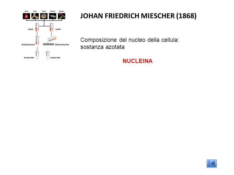 JOHAN FRIEDRICH MIESCHER (1868) Composizione del nucleo della cellula: sostanza azotata NUCLEINA