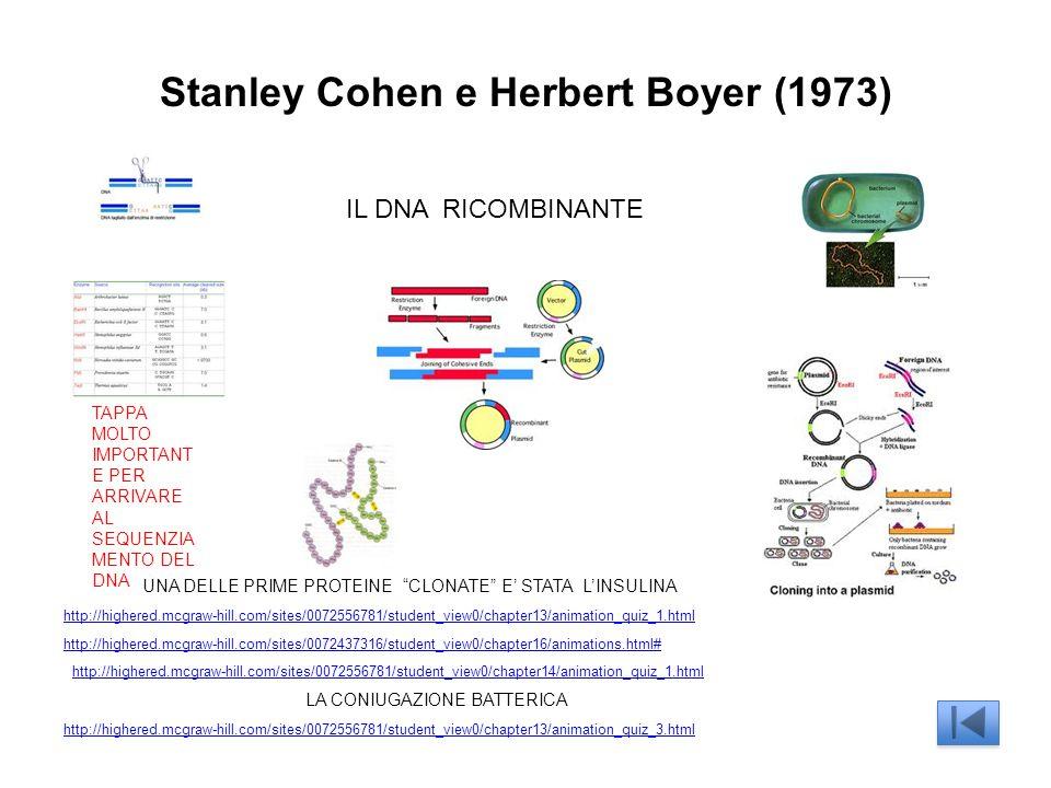 Stanley Cohen e Herbert Boyer (1973) IL DNA RICOMBINANTE TAPPA MOLTO IMPORTANT E PER ARRIVARE AL SEQUENZIA MENTO DEL DNA UNA DELLE PRIME PROTEINE CLONATE E STATA LINSULINA http://highered.mcgraw-hill.com/sites/0072437316/student_view0/chapter16/animations.html# http://highered.mcgraw-hill.com/sites/0072556781/student_view0/chapter13/animation_quiz_1.html LA CONIUGAZIONE BATTERICA http://highered.mcgraw-hill.com/sites/0072556781/student_view0/chapter13/animation_quiz_3.html http://highered.mcgraw-hill.com/sites/0072556781/student_view0/chapter14/animation_quiz_1.html