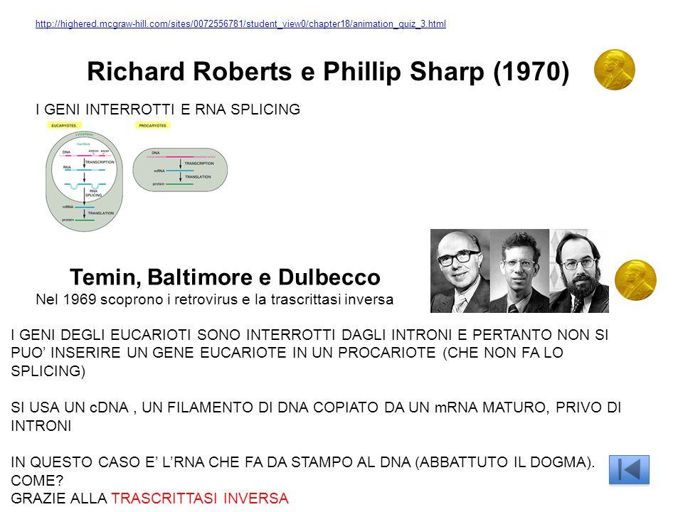Richard Roberts e Phillip Sharp (1970) I GENI INTERROTTI E RNA SPLICING I GENI DEGLI EUCARIOTI SONO INTERROTTI DAGLI INTRONI E PERTANTO NON SI PUO INSERIRE UN GENE EUCARIOTE IN UN PROCARIOTE (CHE NON FA LO SPLICING) SI USA UN cDNA, UN FILAMENTO DI DNA COPIATO DA UN mRNA MATURO, PRIVO DI INTRONI IN QUESTO CASO E LRNA CHE FA DA STAMPO AL DNA (ABBATTUTO IL DOGMA).