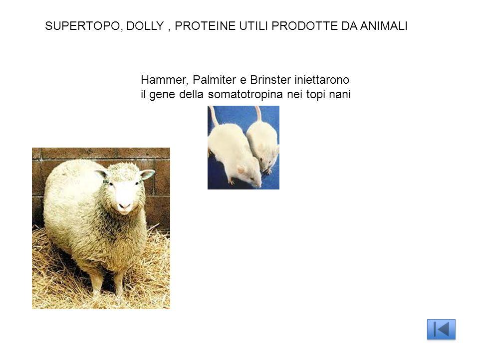SUPERTOPO, DOLLY, PROTEINE UTILI PRODOTTE DA ANIMALI Hammer, Palmiter e Brinster iniettarono il gene della somatotropina nei topi nani