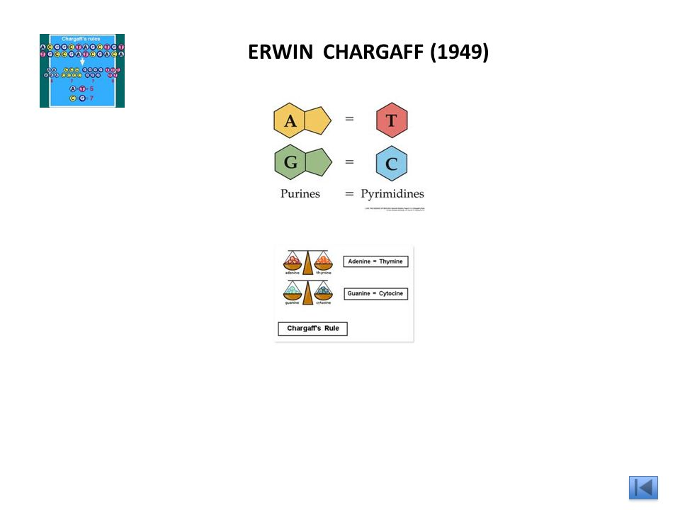 Kary Banks Mullis (1983) PCR : Polimerase Chain Reaction http://www.youtube.com/watch?v=_YgXcJ4n-kQ