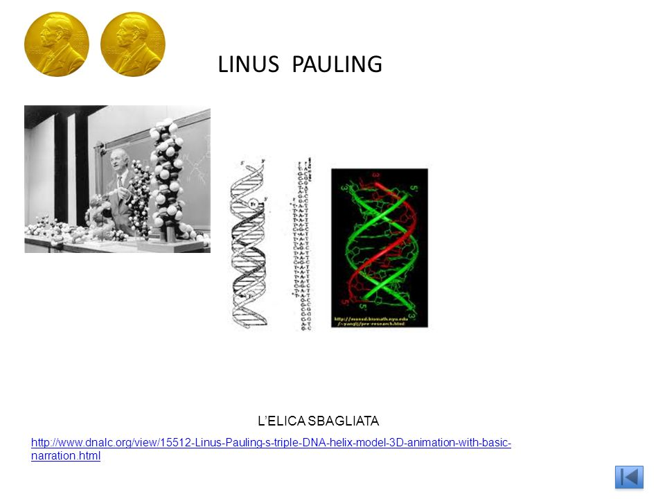 LINUS PAULING http://www.dnalc.org/view/15512-Linus-Pauling-s-triple-DNA-helix-model-3D-animation-with-basic- narration.html LELICA SBAGLIATA