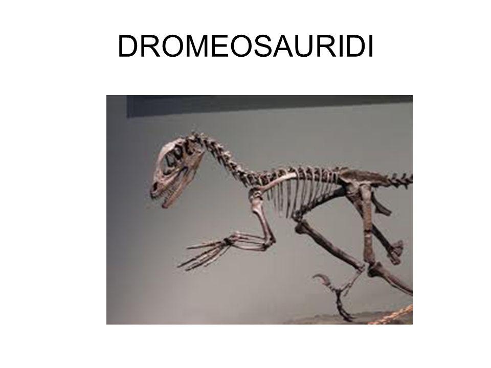 DROMEOSAURIDI