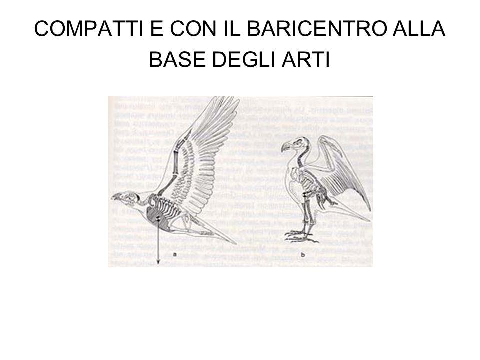 PESCI (ma mangiano anche animali acquatici come ninfe di libellule e rane) Martin Pescatore Airone