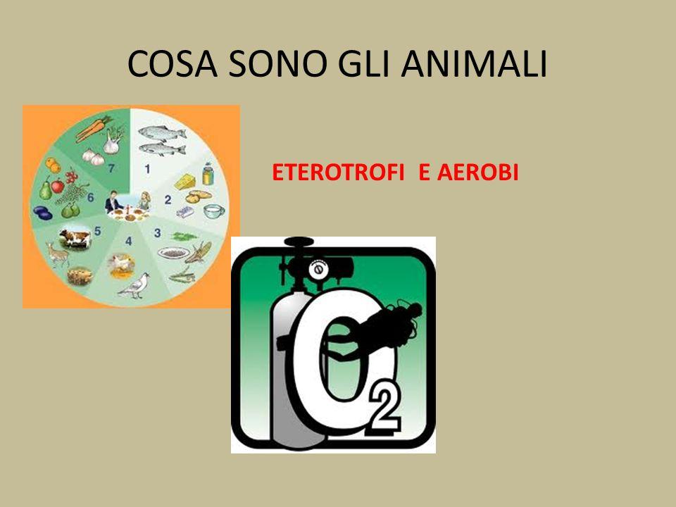 COSA SONO GLI ANIMALI ETEROTROFI E AEROBI