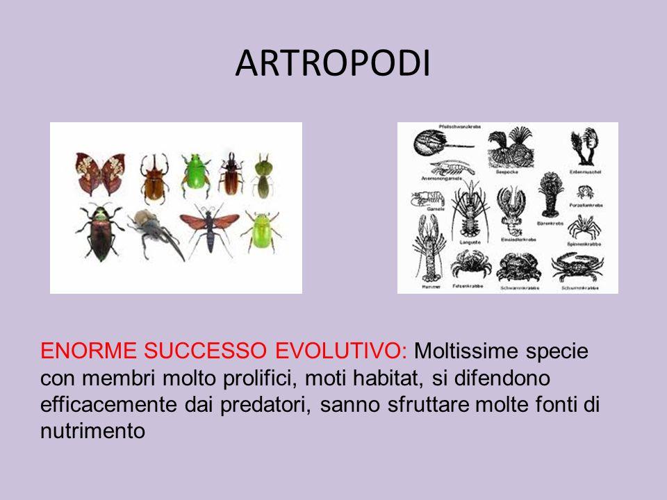 ARTROPODI ENORME SUCCESSO EVOLUTIVO: Moltissime specie con membri molto prolifici, moti habitat, si difendono efficacemente dai predatori, sanno sfrut