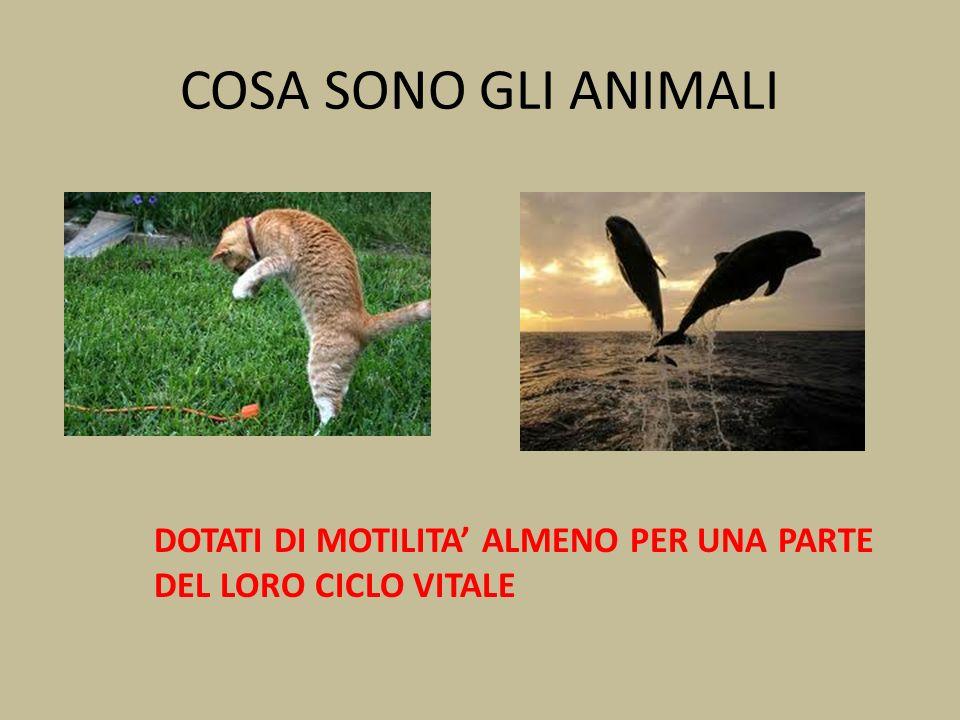 COSA SONO GLI ANIMALI DOTATI DI MOTILITA ALMENO PER UNA PARTE DEL LORO CICLO VITALE