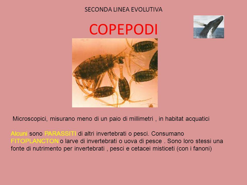 SECONDA LINEA EVOLUTIVA COPEPODI Microscopici, misurano meno di un paio di millimetri, in habitat acquatici Alcuni sono PARASSITI di altri invertebrat
