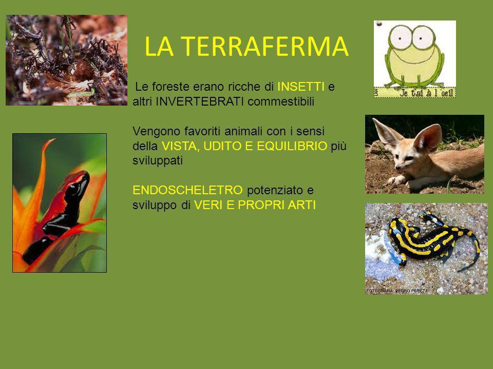 LA TERRAFERMA Le foreste erano ricche di INSETTI e altri INVERTEBRATI commestibili Vengono favoriti animali con i sensi della VISTA, UDITO E EQUILIBRI