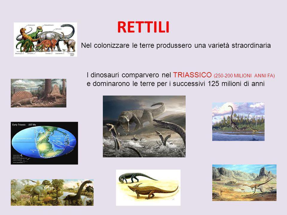 RETTILI Nel colonizzare le terre produssero una varietà straordinaria I dinosauri comparvero nel TRIASSICO (250-200 MILIONI ANNI FA) e dominarono le t