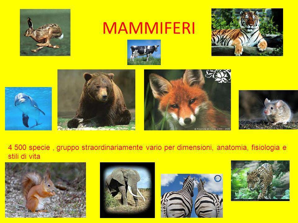 MAMMIFERI 4 500 specie, gruppo straordinariamente vario per dimensioni, anatomia, fisiologia e stili di vita
