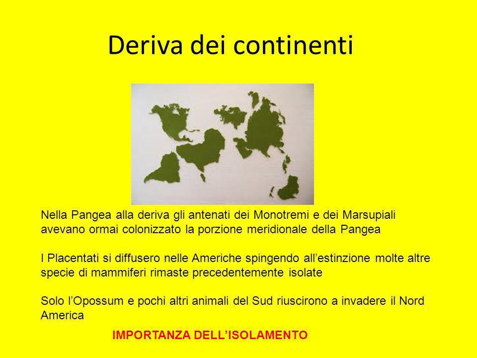 Deriva dei continenti Nella Pangea alla deriva gli antenati dei Monotremi e dei Marsupiali avevano ormai colonizzato la porzione meridionale della Pan