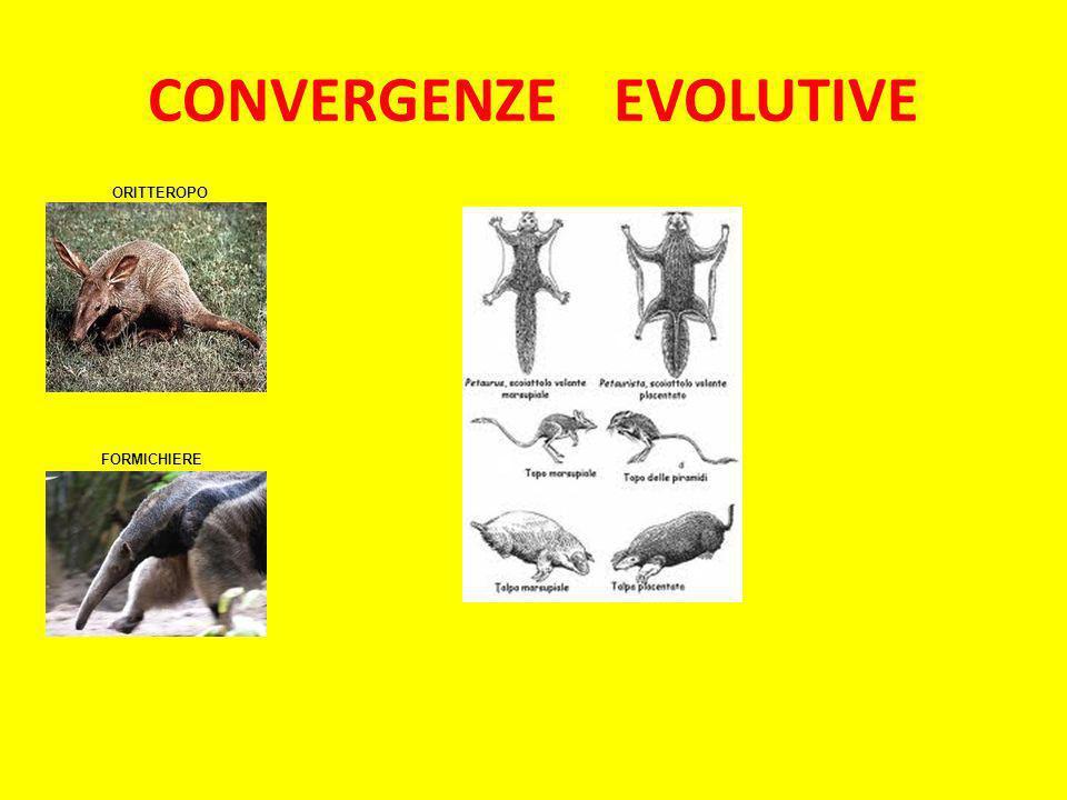 CONVERGENZE EVOLUTIVE ORITTEROPO FORMICHIERE