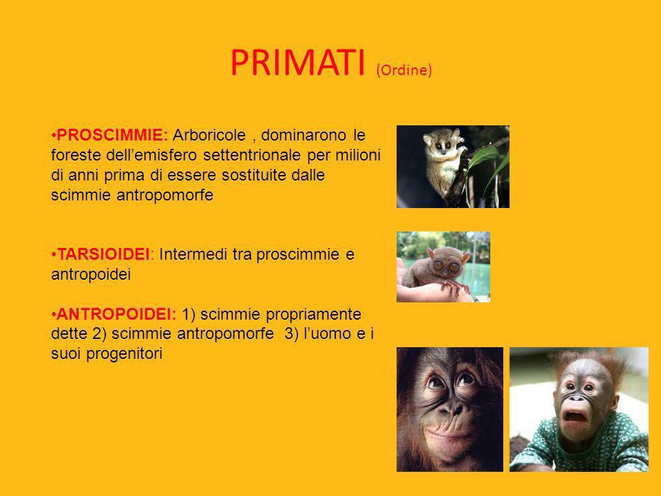PRIMATI (Ordine) PROSCIMMIE: Arboricole, dominarono le foreste dellemisfero settentrionale per milioni di anni prima di essere sostituite dalle scimmi