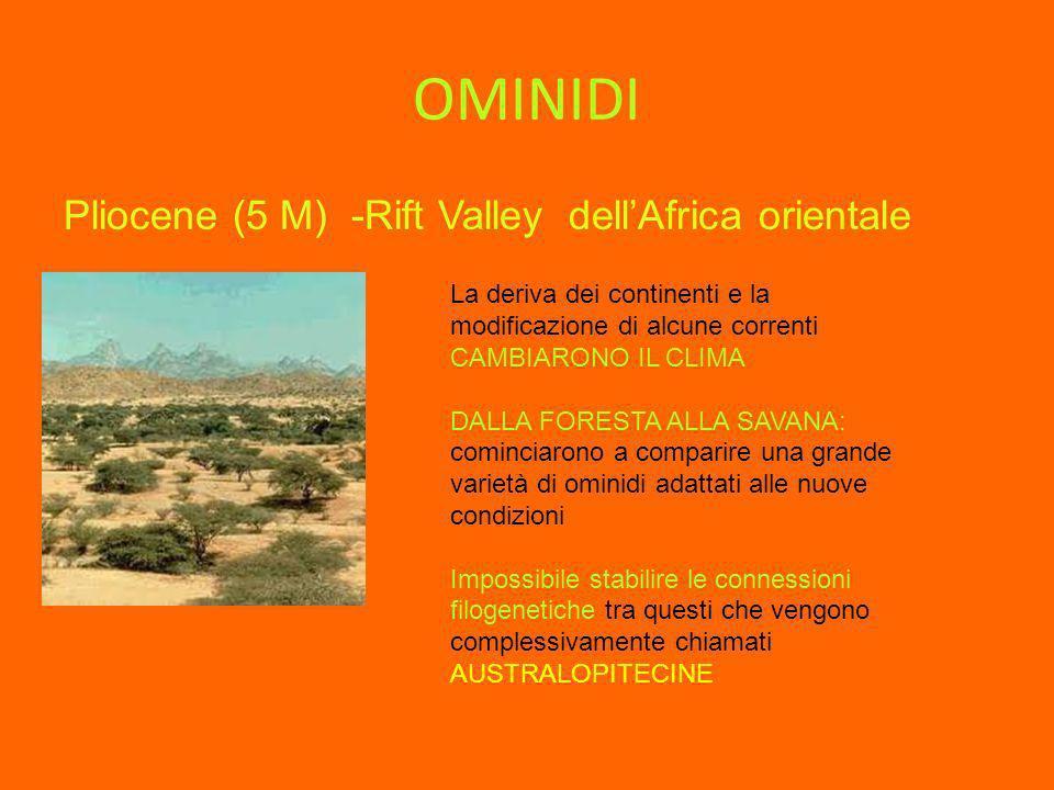 OMINIDI Pliocene (5 M) -Rift Valley dellAfrica orientale La deriva dei continenti e la modificazione di alcune correnti CAMBIARONO IL CLIMA DALLA FORE