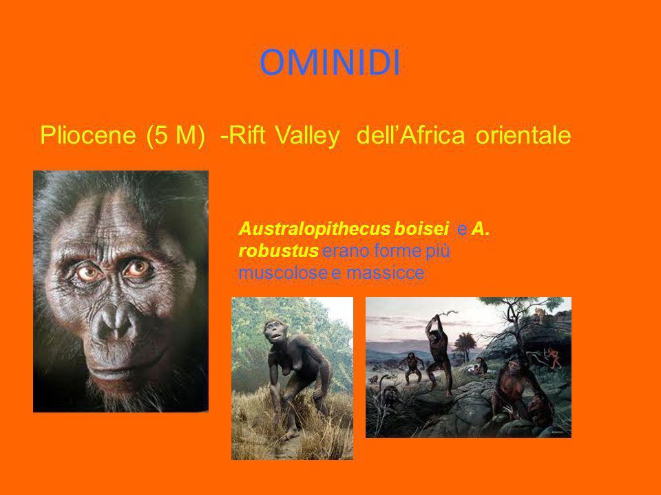 OMINIDI Pliocene (5 M) -Rift Valley dellAfrica orientale Australopithecus boisei e A. robustus erano forme più muscolose e massicce
