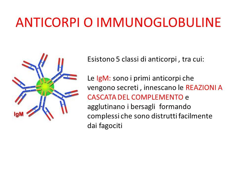 ANTICORPI O IMMUNOGLOBULINE Esistono 5 classi di anticorpi, tra cui: Le IgM: sono i primi anticorpi che vengono secreti, innescano le REAZIONI A CASCA