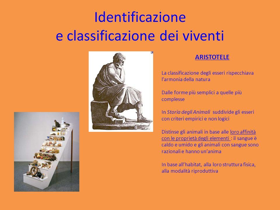 Identificazione e classificazione dei viventi I LIMITI