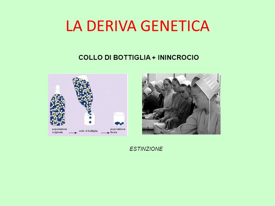 LA DERIVA GENETICA COLLO DI BOTTIGLIA + ININCROCIO ESTINZIONE