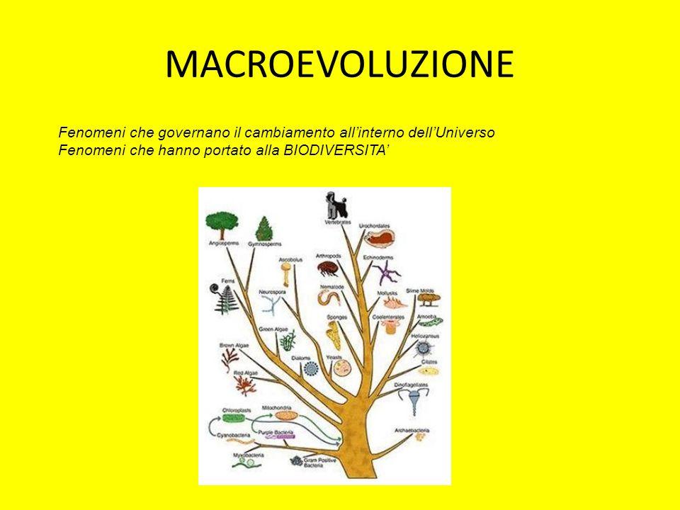 MACROEVOLUZIONE Fenomeni che governano il cambiamento allinterno dellUniverso Fenomeni che hanno portato alla BIODIVERSITA