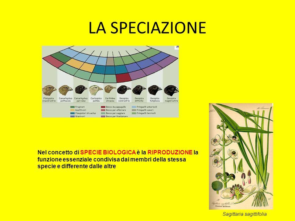 LA SPECIAZIONE Nel concetto di SPECIE BIOLOGICA è la RIPRODUZIONE la funzione essenziale condivisa dai membri della stessa specie e differente dalle a