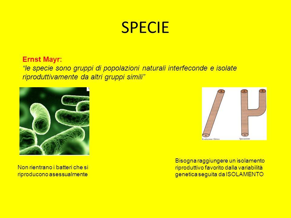SPECIE Ernst Mayr: le specie sono gruppi di popolazioni naturali interfeconde e isolate riproduttivamente da altri gruppi simili Non rientrano i batte