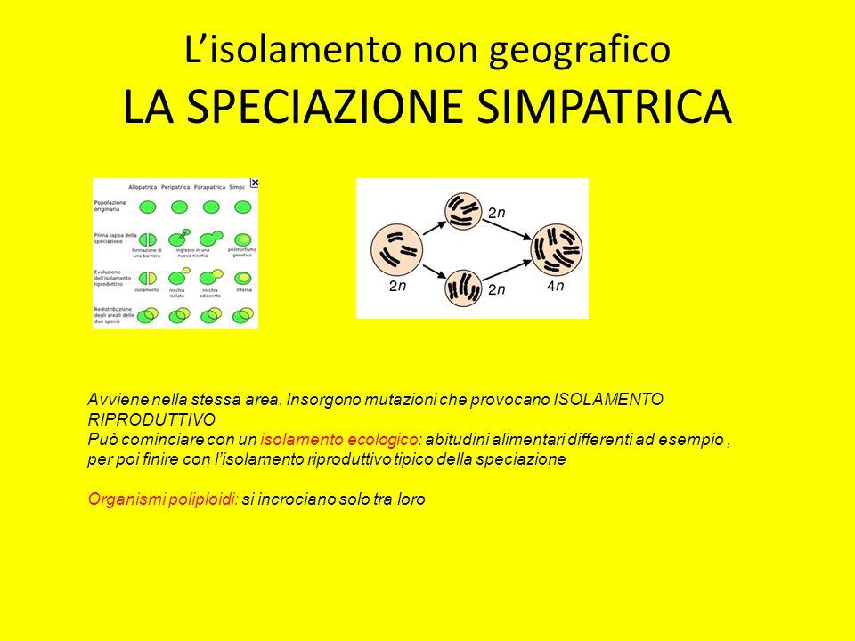 Lisolamento non geografico LA SPECIAZIONE SIMPATRICA Avviene nella stessa area. Insorgono mutazioni che provocano ISOLAMENTO RIPRODUTTIVO Può comincia