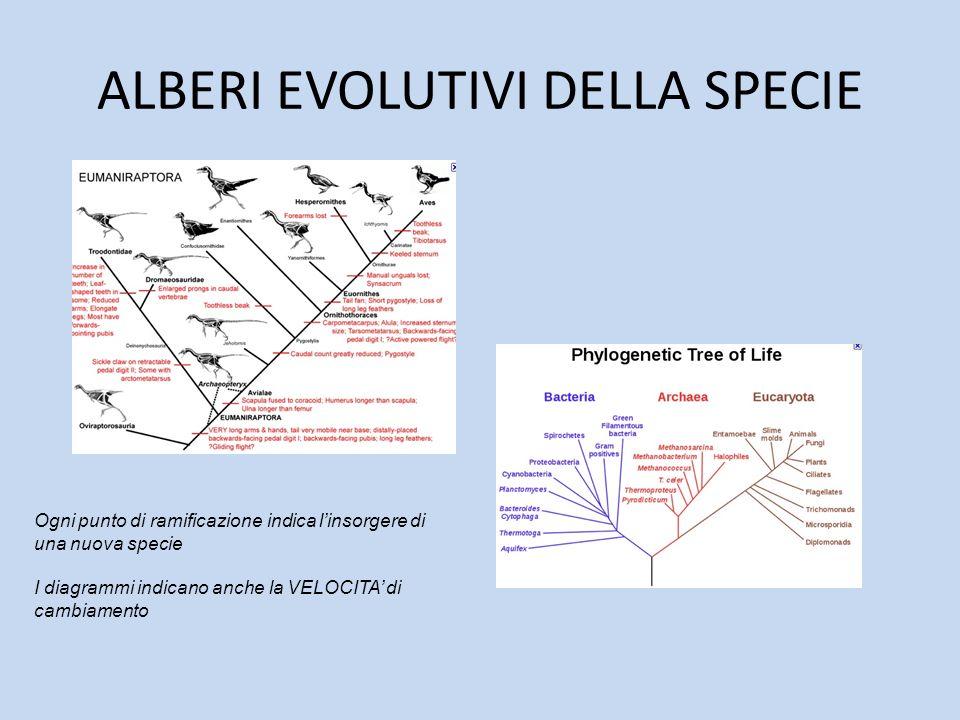 ALBERI EVOLUTIVI DELLA SPECIE Ogni punto di ramificazione indica linsorgere di una nuova specie I diagrammi indicano anche la VELOCITA di cambiamento
