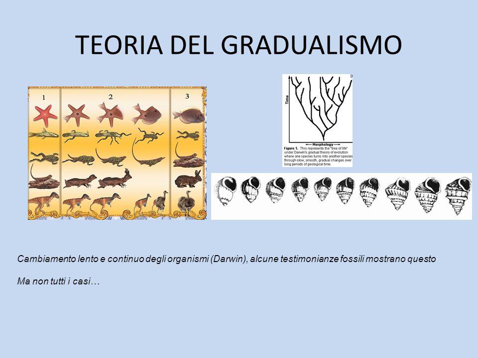 TEORIA DEL GRADUALISMO Cambiamento lento e continuo degli organismi (Darwin), alcune testimonianze fossili mostrano questo Ma non tutti i casi…