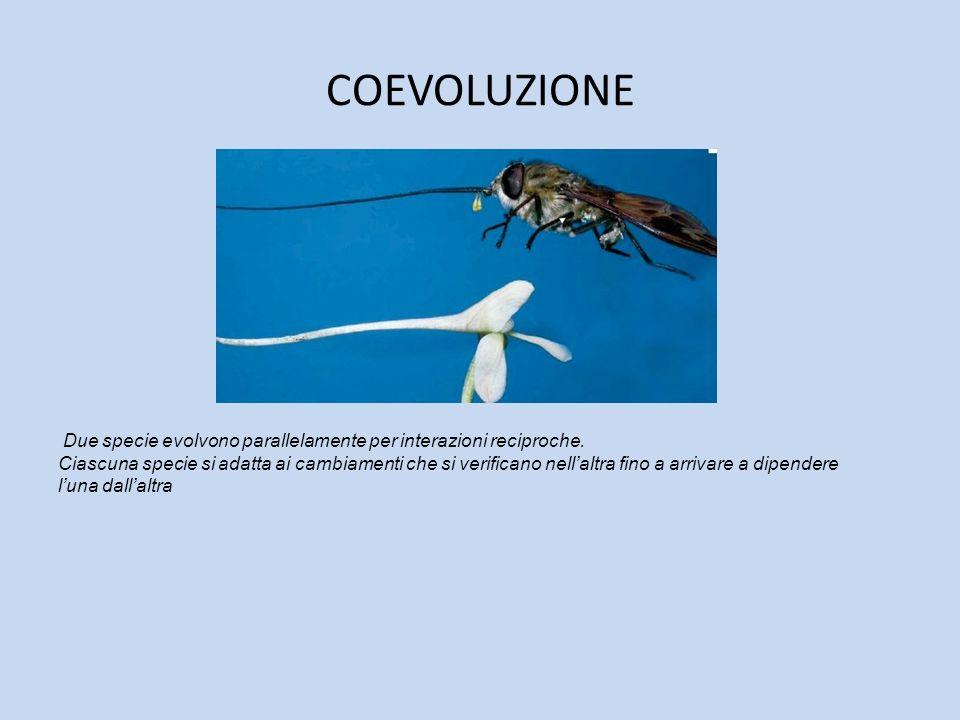 COEVOLUZIONE Due specie evolvono parallelamente per interazioni reciproche. Ciascuna specie si adatta ai cambiamenti che si verificano nellaltra fino