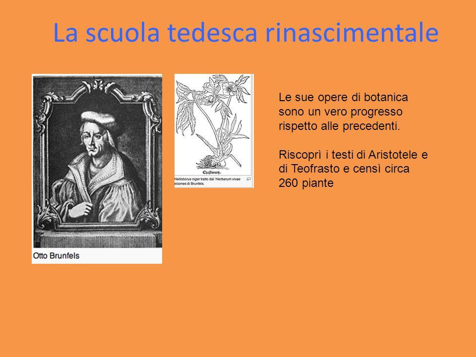 La scuola tedesca rinascimentale Le sue opere di botanica sono un vero progresso rispetto alle precedenti. Riscoprì i testi di Aristotele e di Teofras