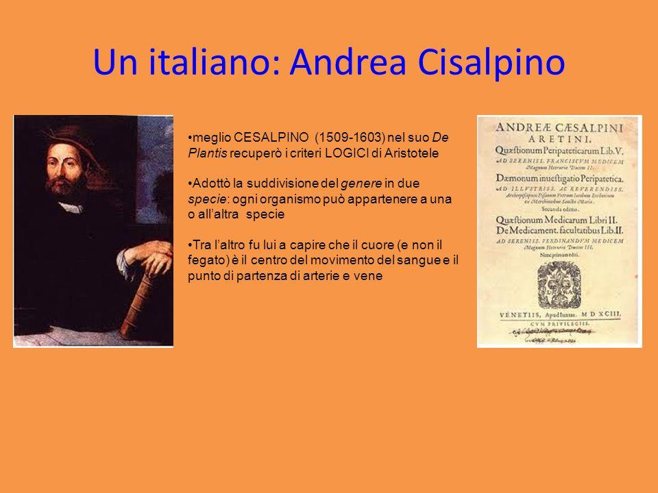 Un italiano: Andrea Cisalpino meglio CESALPINO (1509-1603) nel suo De Plantis recuperò i criteri LOGICI di Aristotele Adottò la suddivisione del gener