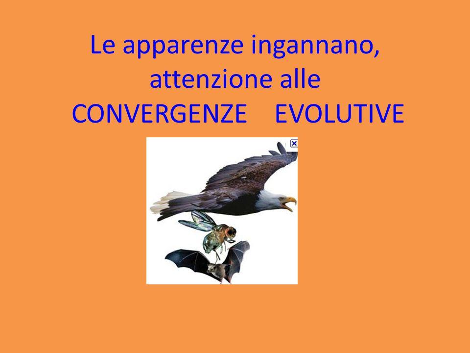 Le apparenze ingannano, attenzione alle CONVERGENZE EVOLUTIVE