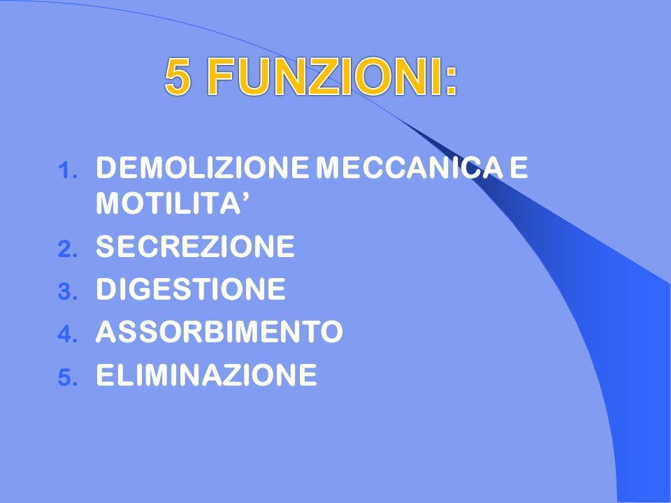 1. DEMOLIZIONE MECCANICA E MOTILITA 2. SECREZIONE 3. DIGESTIONE 4. ASSORBIMENTO 5. ELIMINAZIONE