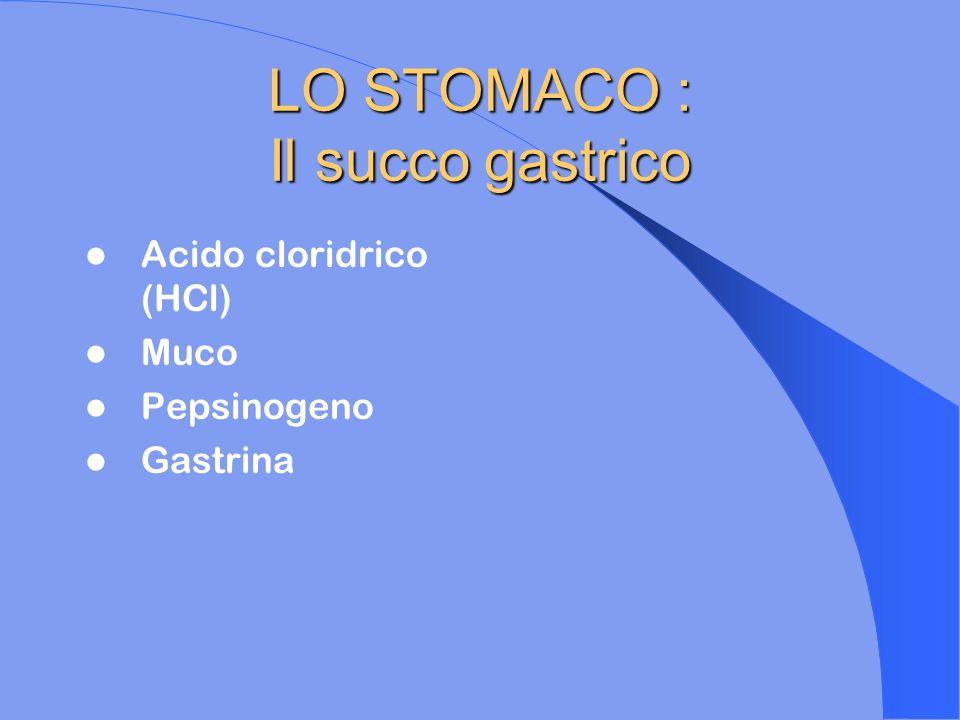 LO STOMACO : Il succo gastrico Acido cloridrico (HCl) Muco Pepsinogeno Gastrina