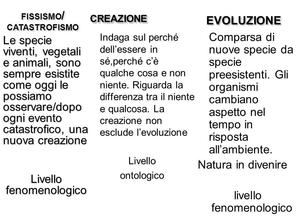 EVOLUZIONE Comparsa di nuove specie da specie preesistenti. Gli organismi cambiano aspetto nel tempo in risposta allambiente. Natura in divenire livel