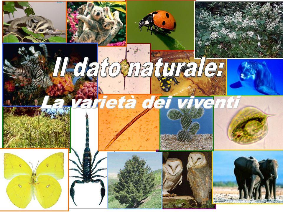 Alfred Russel Wallace (1821-1913) Naturalista: viaggia in Sud America e Malesia raccogliendo campioni Nel 1858 formula indipendentemente da Darwin una teoria sulla selezione naturale