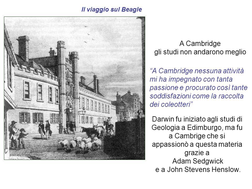 Il viaggio sul Beagle Darwin fu iniziato agli studi di Geologia a Edimburgo, ma fu a Cambrige che si appassionò a questa materia grazie a Adam Sedgwic