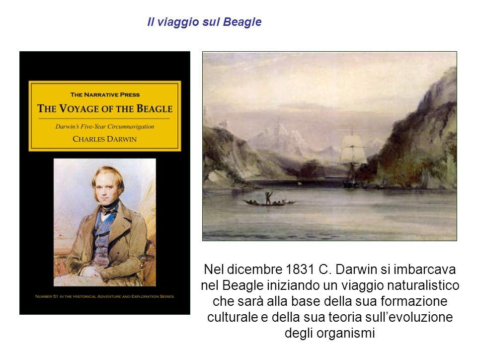 Il viaggio sul Beagle Nel dicembre 1831 C. Darwin si imbarcava nel Beagle iniziando un viaggio naturalistico che sarà alla base della sua formazione c