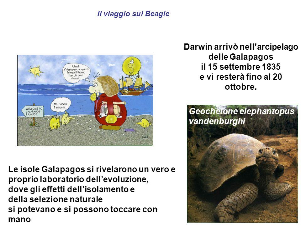Il viaggio sul Beagle Darwin arrivò nellarcipelago delle Galapagos il 15 settembre 1835 e vi resterà fino al 20 ottobre. Le isole Galapagos si rivelar