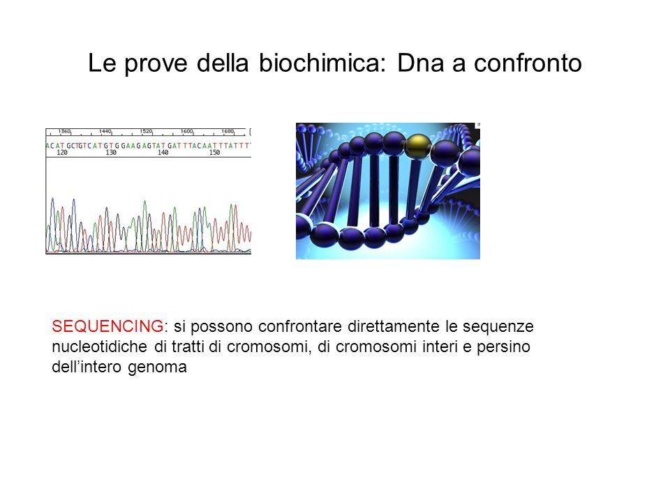 Le prove della biochimica: Dna a confronto SEQUENCING: si possono confrontare direttamente le sequenze nucleotidiche di tratti di cromosomi, di cromos
