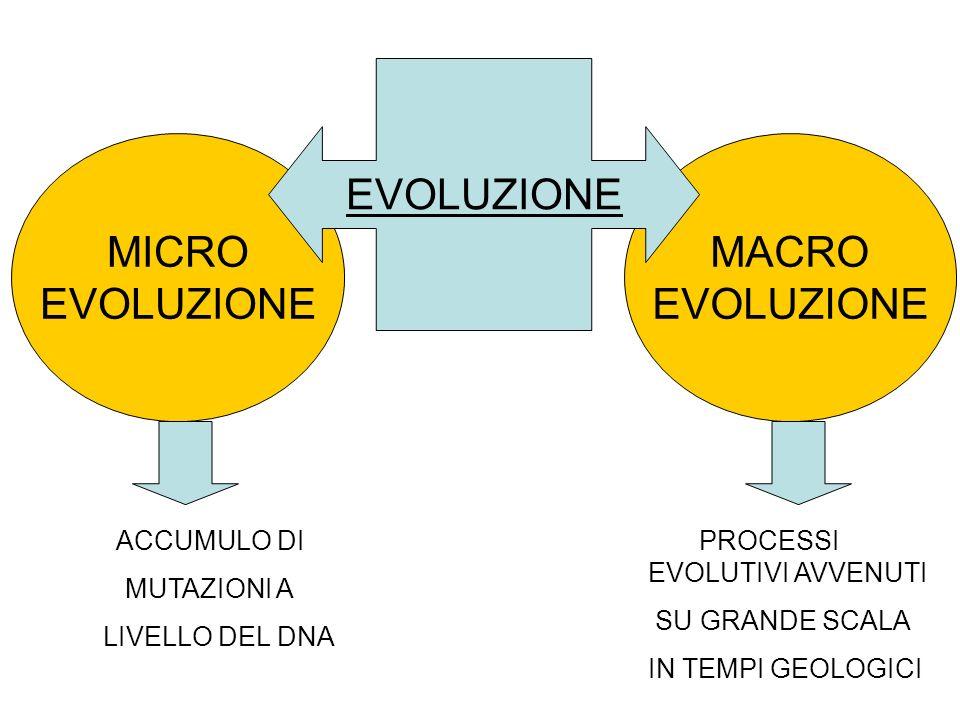 MICRO EVOLUZIONE MACRO EVOLUZIONE ACCUMULO DI MUTAZIONI A LIVELLO DEL DNA PROCESSI EVOLUTIVI AVVENUTI SU GRANDE SCALA IN TEMPI GEOLOGICI