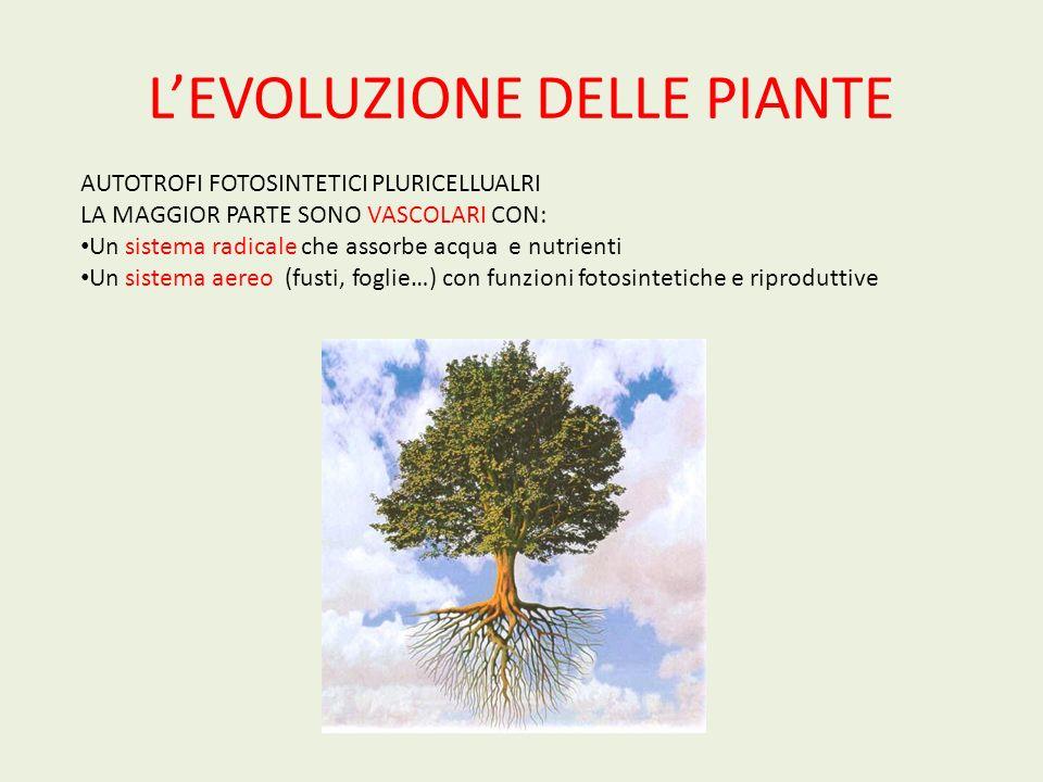 LEVOLUZIONE DELLE PIANTE PIANTE VASCOLARI SENZA SEMI : Licofite, Equiseti, Felci