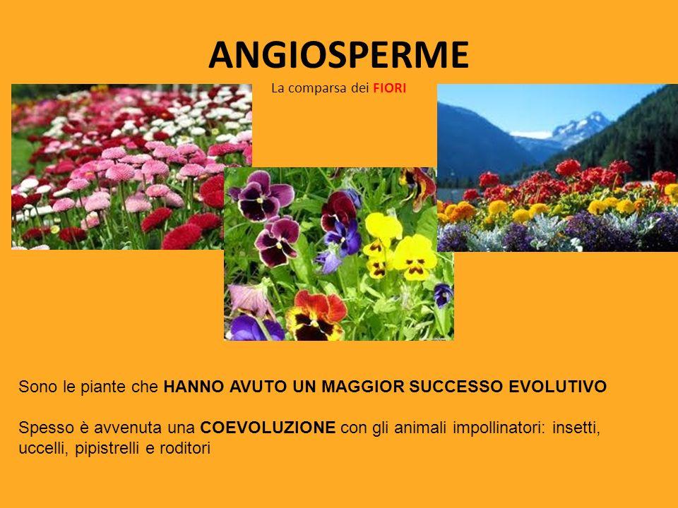 ANGIOSPERME La comparsa dei FIORI Sono le piante che HANNO AVUTO UN MAGGIOR SUCCESSO EVOLUTIVO Spesso è avvenuta una COEVOLUZIONE con gli animali impo