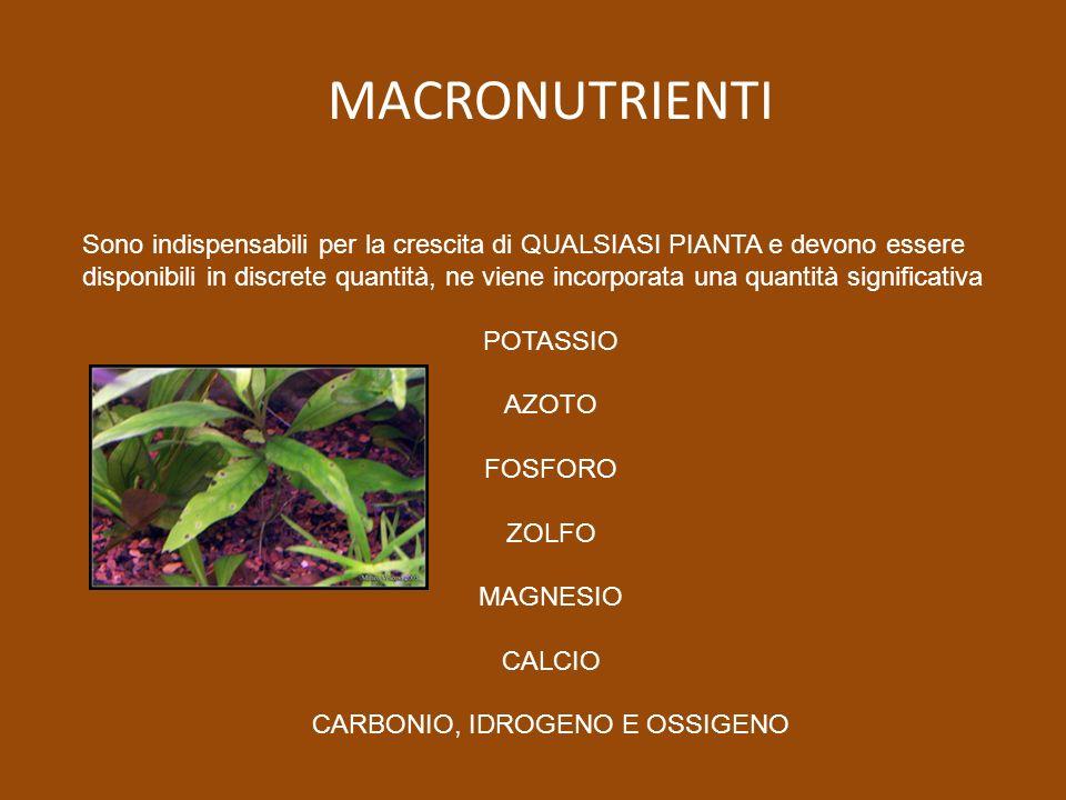 MACRONUTRIENTI Sono indispensabili per la crescita di QUALSIASI PIANTA e devono essere disponibili in discrete quantità, ne viene incorporata una quantità significativa POTASSIO AZOTO FOSFORO ZOLFO MAGNESIO CALCIO CARBONIO, IDROGENO E OSSIGENO